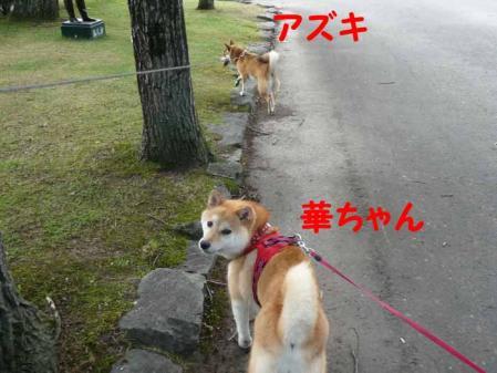 P1260553-AZUKI.jpg