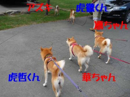P1260557-AZUKI-.jpg