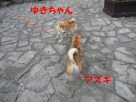 P1260580-AZUKI.jpg