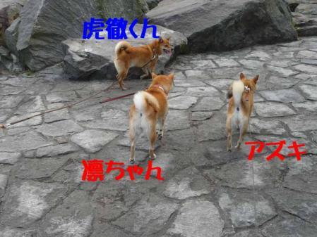 P1260582-AZUKI-.jpg