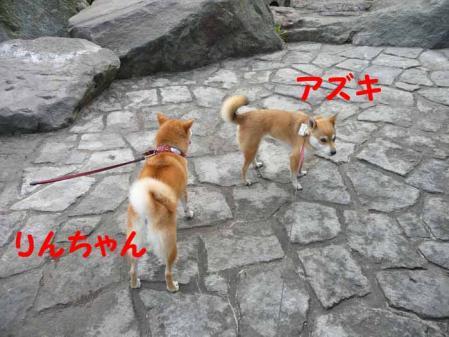 P1260583-AZUKI.jpg
