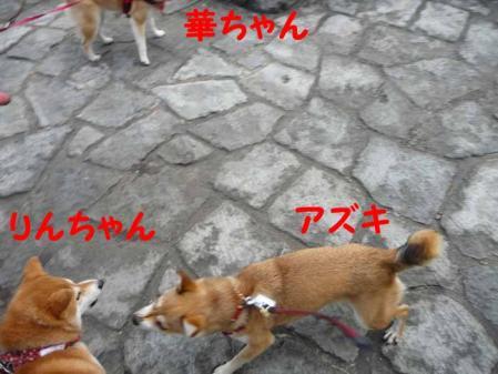P1260584-AZUKI.jpg