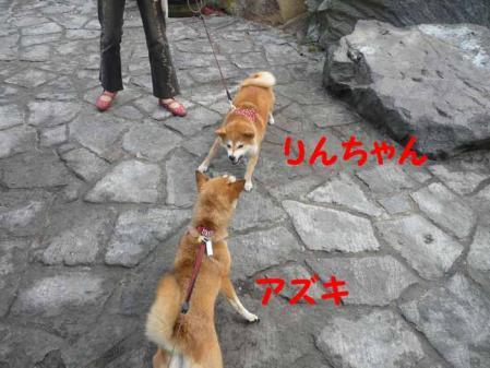 P1260586-AZUKI.jpg
