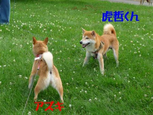 P1260595-AZUKI-.jpg