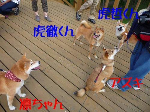 P1260614-AZUKI.jpg