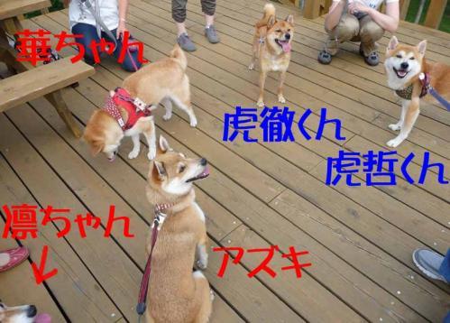 P1260617-AZUKI.jpg