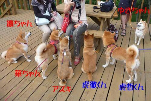 P1260631-AZUKI.jpg