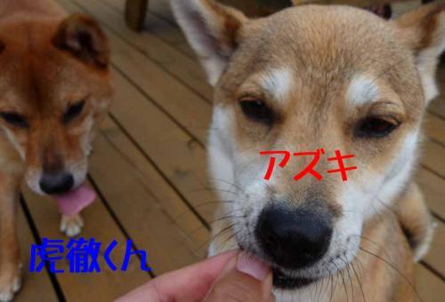 P1260656-AZUKI.jpg