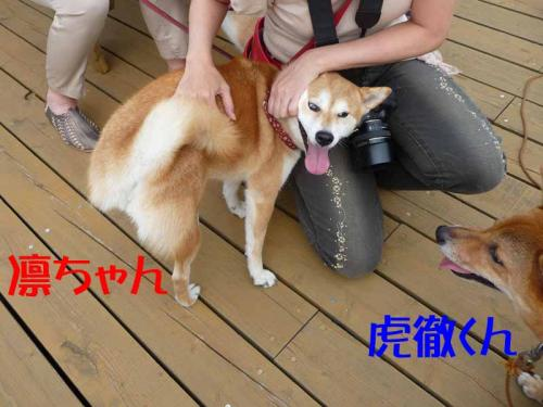 P1260672-AZUKI.jpg