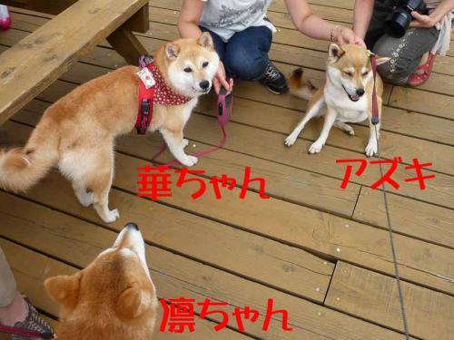 P1260690-AZUKI.jpg