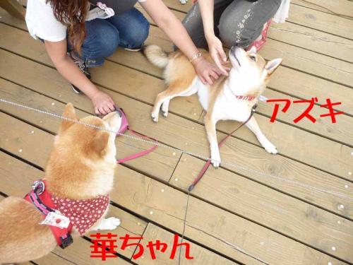 P1260696-AZUKI.jpg
