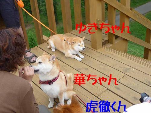 P1260711-AZUKI.jpg