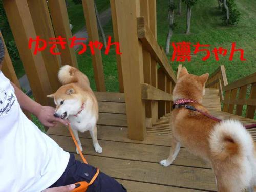 P1260733-AZUKI.jpg