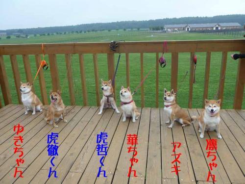 P1260756-AZUKI.jpg