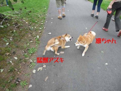 P1260783-AZUKI.jpg