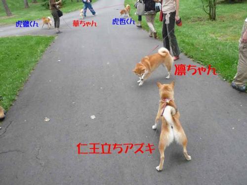P1260784-AZUKI.jpg