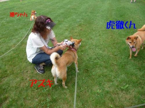 P1260803-AZUKI.jpg