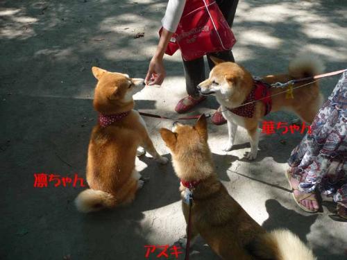 P1270029-AZUKI.jpg