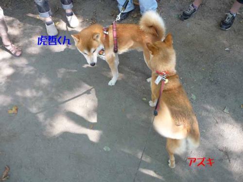P1270141-AZUKI.jpg