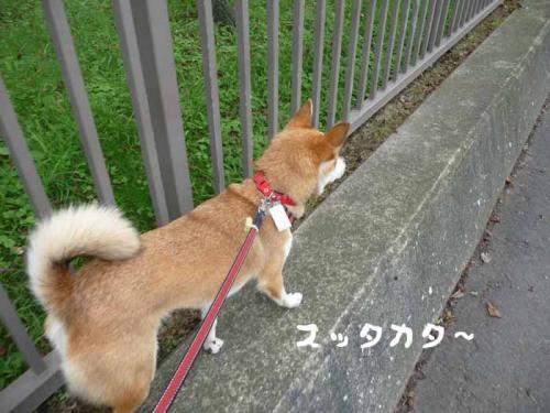 P1280421-AZUKI-.jpg