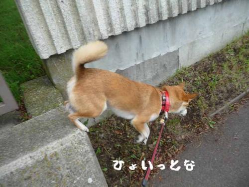 P1280432-AZUKI-.jpg