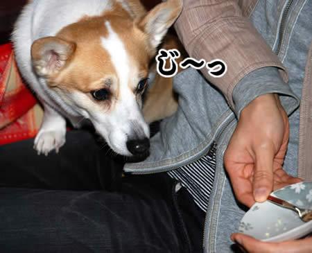 20110104_1033.jpg