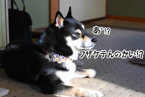 20110125_1546.jpg