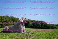 Canon ストックモデル3