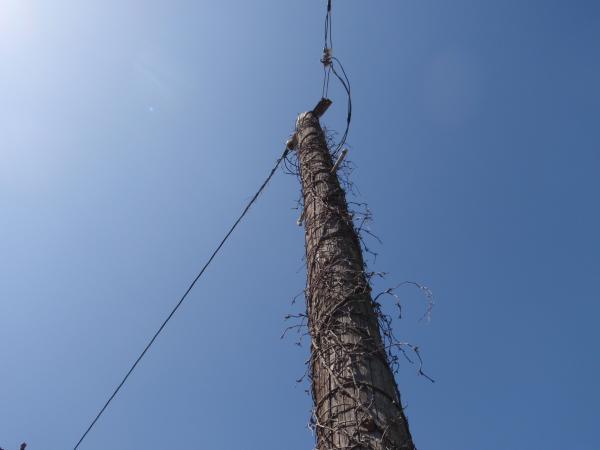木製電柱2