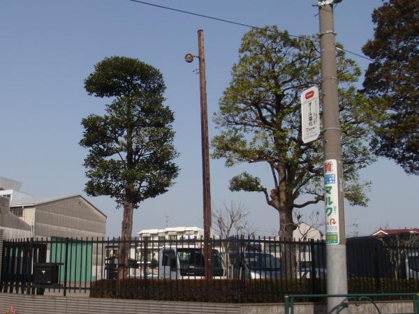 木製電柱5