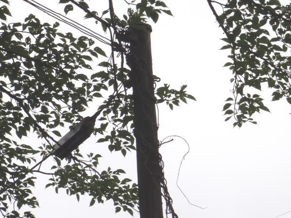 木製電柱16