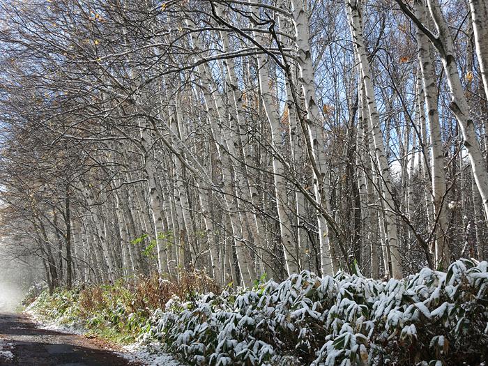 2013 初雪 雑木
