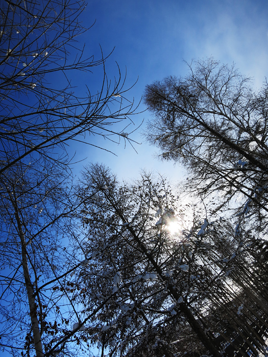 穴の川 雪 逆光の木