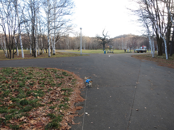 真駒内公園 雪が無くなった