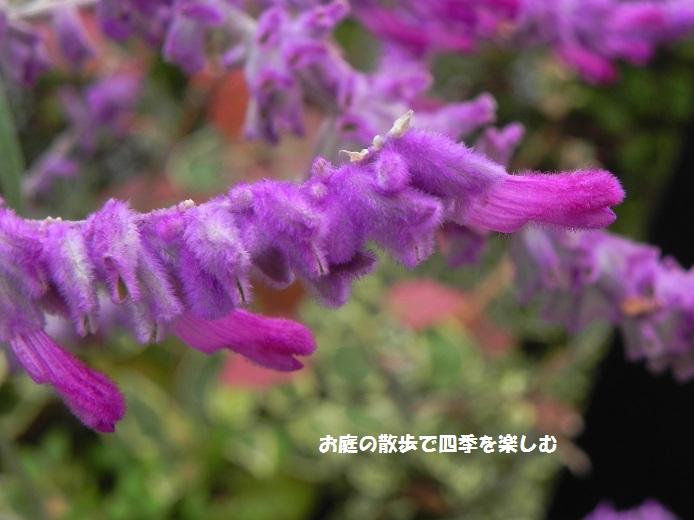 amejisutose-ji4_20141209001132f20.jpg