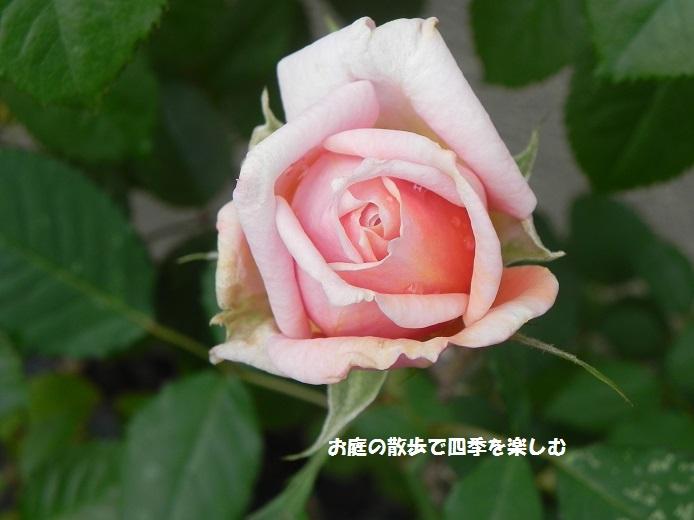 bara59_20141201211446074.jpg