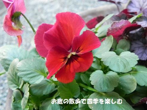 biora14_201411290802134ff.jpg