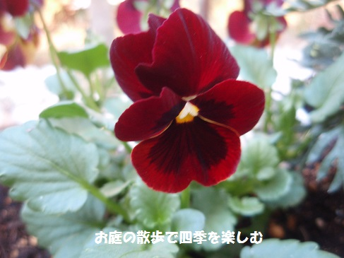 biora18_201411290801253a9.jpg