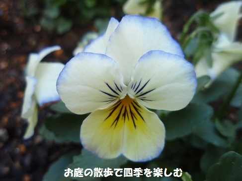 biora21_2014112908012924c.jpg