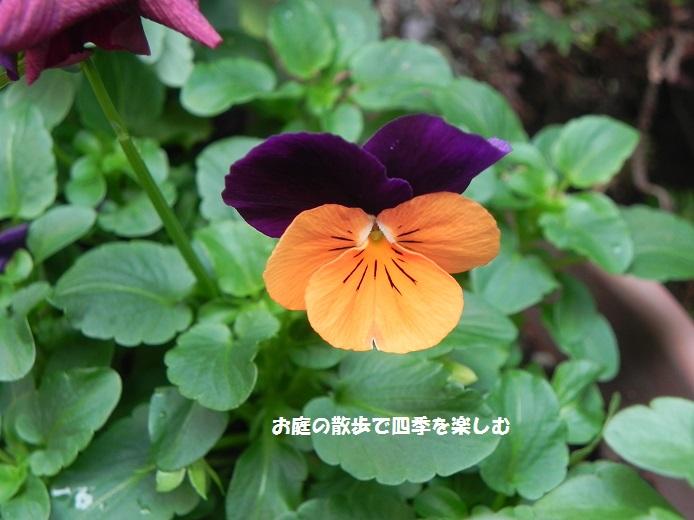 biora28_20141203205553938.jpg