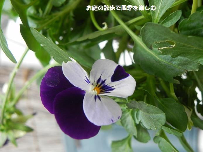 biora31_2014120320555841c.jpg
