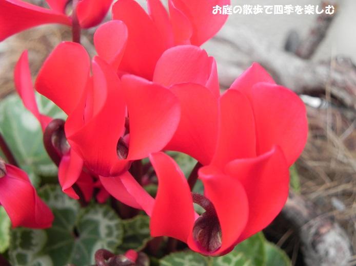 ga-densikuramen3_20141217001630e5a.jpg