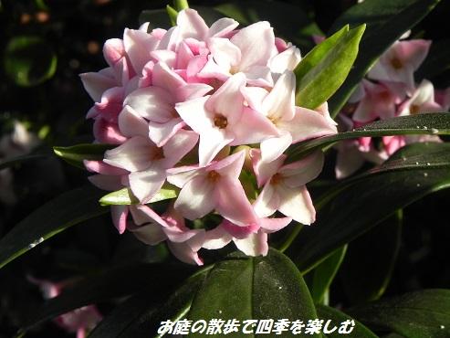 jintyouge4_201312022332378c8.jpg