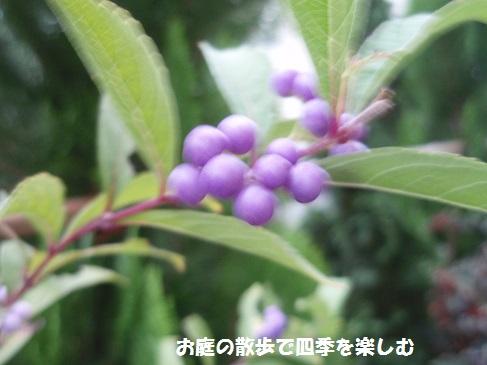 murasaki3.jpg