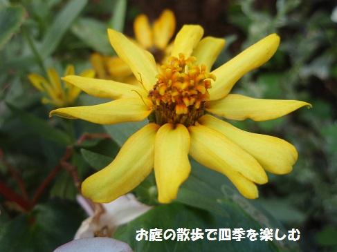 murasaki5.jpg