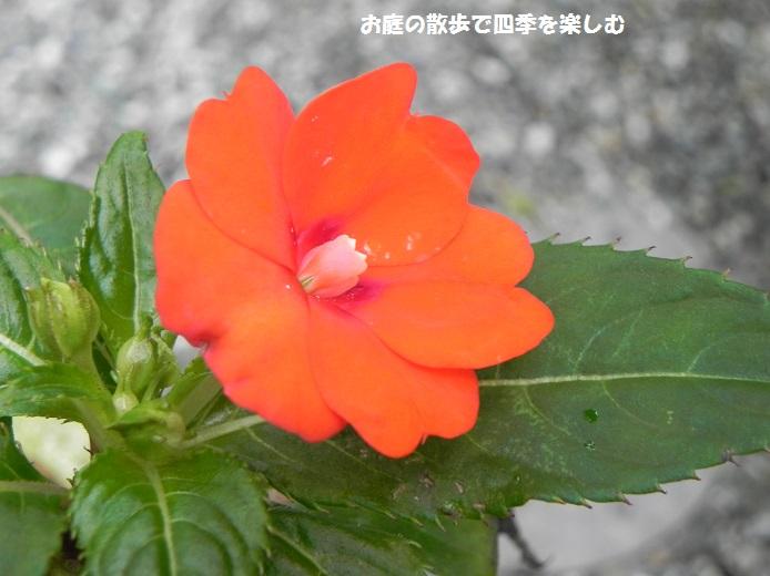 sanparasoru3_2014120121174831d.jpg