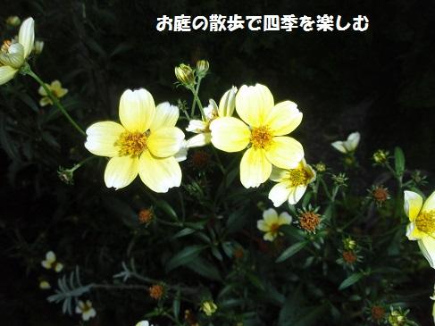 uinta-kosumosu2_201410271741116fc.jpg