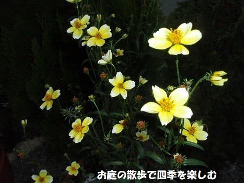 uinta-kosumosu_20141027174206339.jpg