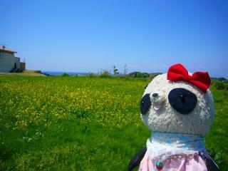 海と菜の花とばぶ氏