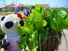 野菜のプチ花壇